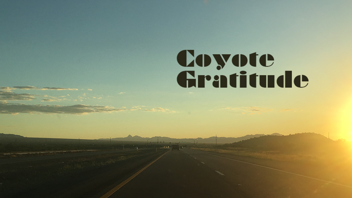 Coyote Gratitude: a cross-country coming of age